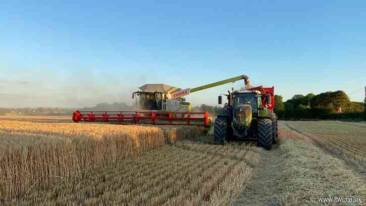 Harvest 2020: Six-row hybrid winter barley in Cambs survives wet autumn