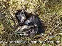 Cães e gatos são envenenados em Votuporanga - Jornal A Cidade - Votuporanga