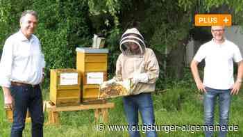 Ein Unternehmer gibt 100.000 Bienen eine neue Heimat - Augsburger Allgemeine