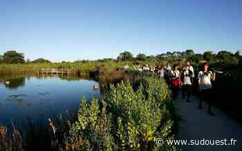 Le Teich joue la carte de l'écotourisme - Sud Ouest