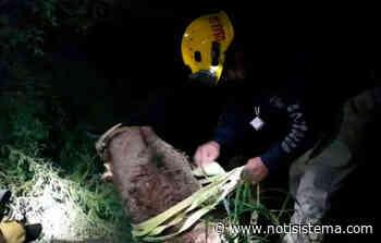 Muere ladrón tras lanzarse a barranco - Notisistema