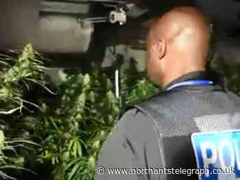 Police seize £128,000 worth of plants in another raid on Northampton cannabis farm - Northamptonshire Telegraph