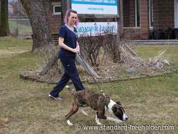 Adoptions resume at OSPCA SD&G Animal Centre in Cornwall