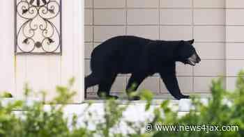 Police issue BOLO for bear in Northwest Jacksonville - WJXT News4JAX