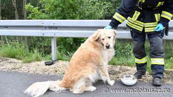 Zwei Verletzte auf A 4 bei Weißenberg und ein Hund - Radio Lausitz
