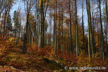 Freistaat will Waldumbau forcieren - Radio Lausitz