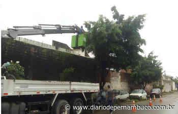 Mutirão de serviços atende Jardim Brasil, em Olinda - Diário de Pernambuco