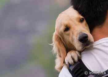 Tribunal upholds Vernon strata decision to refuse emotional support dog - iNFOnews