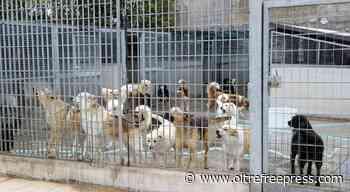 Canile di Melfi ancora chiuso, la denuncia del M5S Basilicata - Oltre Free Press