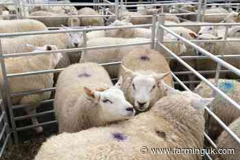 Sales to restart at Builth Wells mart following acquisition