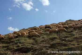 Wales' post-Brexit farm scheme 'risks impacting rural prosperity'