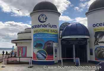 Oceanarium Bournemouth reopened on July 6