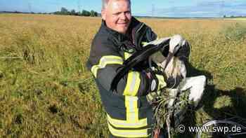 Tierrettungen bei der Freiwilligen Feuerwehr Riedlingen: Zwei Störche geraten in Not - SWP
