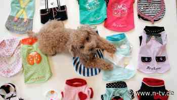 Gezüchtet als Mode-Accessoire:Das große Leiden der Teetassen-Hunde - n-tv NACHRICHTEN