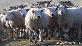 Have your say on Enzootic Abortion of Ewes