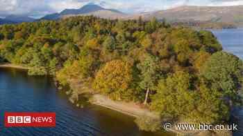 Uninhabited Loch Lomond 'wallaby island' up for sale
