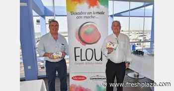 FLOU, the new brand of gourmet Raf Almería tomatoes - FreshPlaza.com