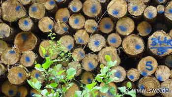 Forstwirtschaft Hohenstein: Großangelegte Inventur im Wald für Entwicklungsziele - SWP