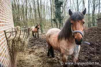 Paarden breken uit in Dilsen-Stokkem (Dilsen-Stokkem) - Het Nieuwsblad