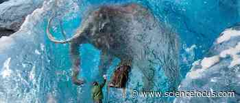 De-extinction: Can we bring extinct animals back from the dead? - BBC Focus Magazine