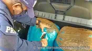 Após fuga na Serra das Russas, homem é detido com mais de 20 quilos de maconha - Diário de Pernambuco