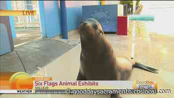 Six Flags is Open! - Let's Talk Animals! - CBS Pittsburgh
