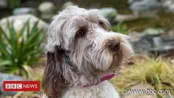 Suffolk kennels dog thefts: Puppies among 17 animals taken - BBC News