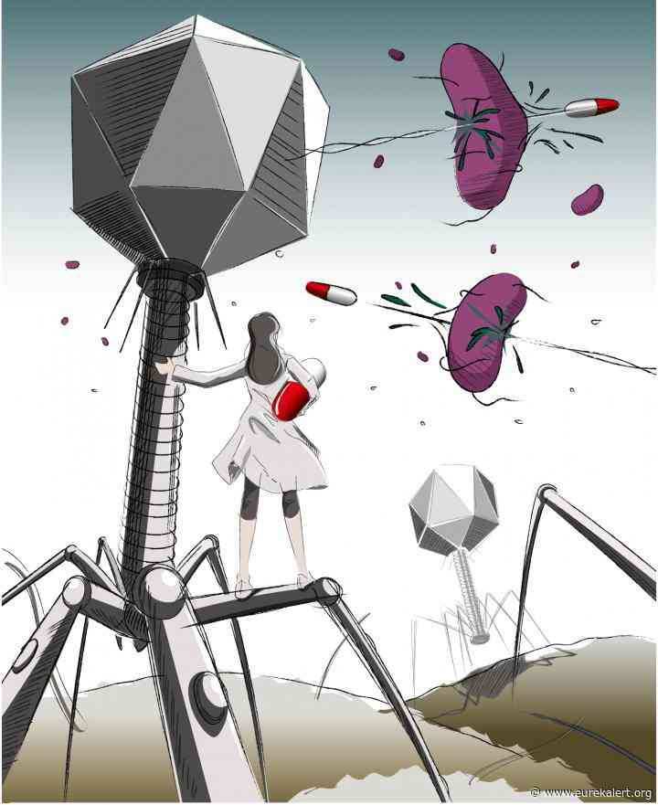 Viral dark matter exposed: Metagenome database detects phage-derived antibacterial enzyme