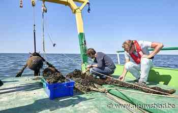 Na protest gemeente en vissers: Colruyt moet extra onderzoek doen naar effect van komst mosselboerderij op visserij - Het Nieuwsblad