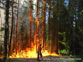 Four new Forest Fires start on July 9 - My North Bay Now