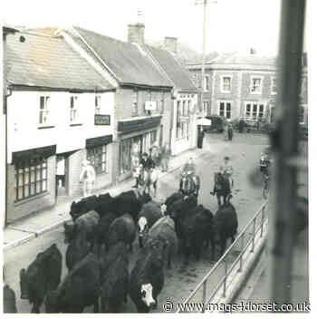 History and heritage of commoning brought together in New Forest project - mags4dorset