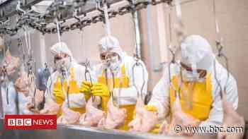 Coronavirus: Food plant cases no longer an anxiety, says FM - BBC News