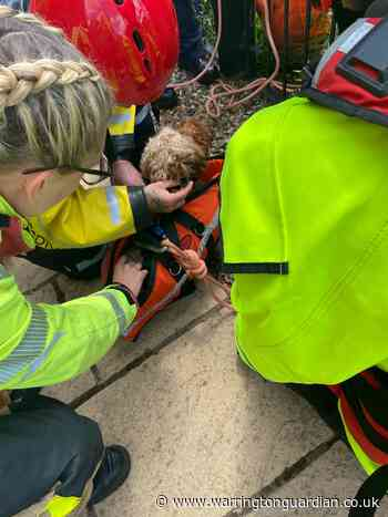 Harry the dog is rescued after falling into Manchester Ship Canal