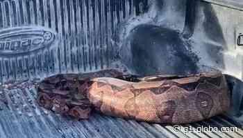 Três cobras são resgatadas em João Pessoa e Bayeux, nesta sexta-feira (10) - G1