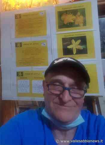 Bagolino Valsabbia - L'iperico, nel bene e nel male - Valle Sabbia News
