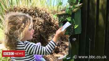 Coronavirus: Devon teacher creates fairy wonderland in lockdown