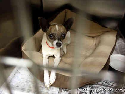 Pet Adoption Fees Reduced Through Sunday At SPCA, LA City Shelters