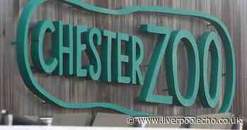 Chester Zoo visitors targeted by criminals as police issue warning