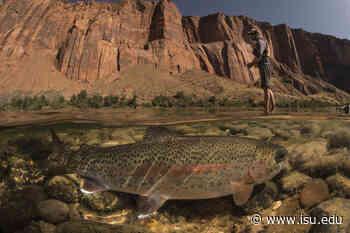Food web dynamics Influence mercury movement in Colorado River, Grand Canyon - Idaho State University