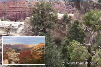 Grand Canyon hikers scream as woman plunges 100ft to her death while taking photos with family - The Sun