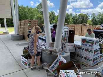 Around 500 Horry County families benefit from Friday food drive - WMBF