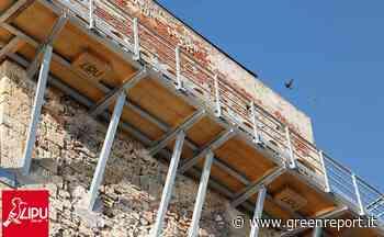 Livorno: 16 nidi artificiali per il rondone pallido sulla Torre di Calafuria - Greenreport: economia ecologica e sviluppo sostenibile
