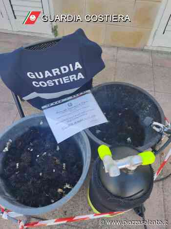 """Guardia costiera di Gallipoli, pesca di frodo da reprimere ma non solo: c'è anche il monitoraggio del """"Gabbiano corso"""" - Piazzasalento"""