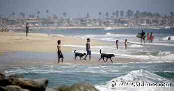 Unofficial dog beach at Santa Ana River jetty to get more signs to stay away - Los Angeles Times