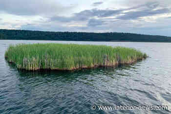 Large rogue floating 'island' corralled by Lac la Hache residents - Smithers Interior News