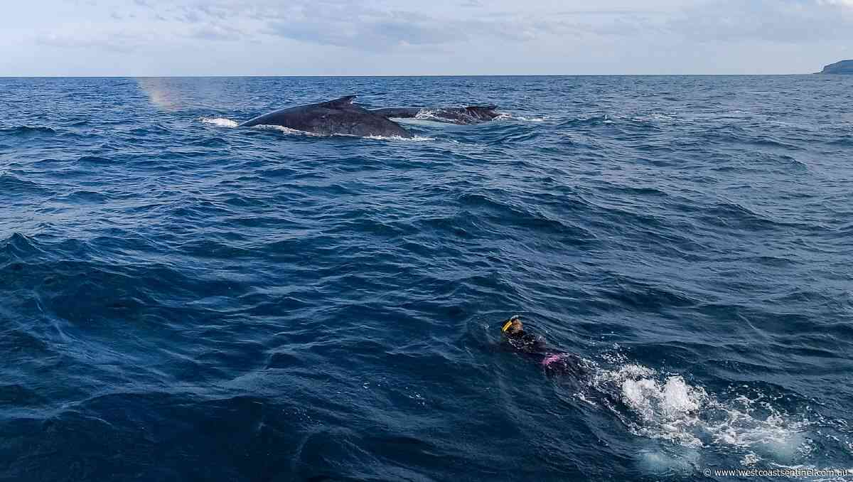 Deeply personal whale encounter in Jervis Bay - West Coast Sentinel