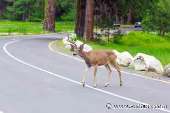 Police have seen an increase in collisions involving wildlife of late