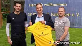 Mit Regionalliga-Erfahrung: Doppelte Verstärkung für Blau-Gelb Falkensee - Sportbuzzer