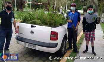 Ayuntamiento de Zacapu, entrega árboles en las comunidades para reforestar al municipio - El Diario Visión