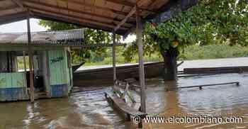 Invierno ocasionó emergencia en Vigía del Fuerte: más de tres mil familias afectadas - El Colombiano